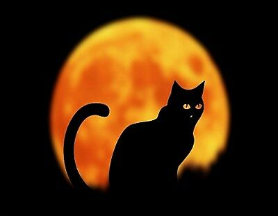 METAL MAGNET Halloween Black Cat Orange Moon Cats MAGNET  (Orange Moon Halloween)