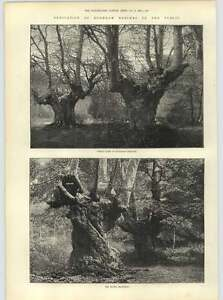 1883 The Elder Brethren Burnham Beeches Dedicated To The Public