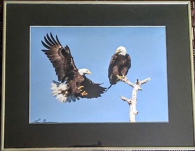 Bird Wildlife Photography - American Bald Eagles - Lou Newman Art Print