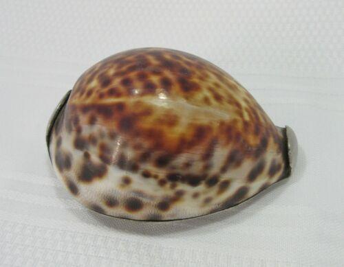 "Antique Scottish Snuff Box Cowrie Shell ""Hae A Snuff"""