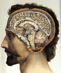 Vintage 1800's Human Brain Surgical Anatomy Fabric poster16