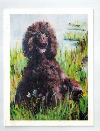 New Irish Water Spaniel Note Card Set - 12 Notecards By Ruth Maystead IWS-1
