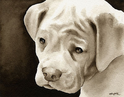 White Boxer Puppy Art Print Sepia Watercolor Painting by Artist DJR