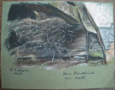 An Original Pastel Painting by R.F. (Bob) Wyatt Hen Blackbird on Nest 1970s Art