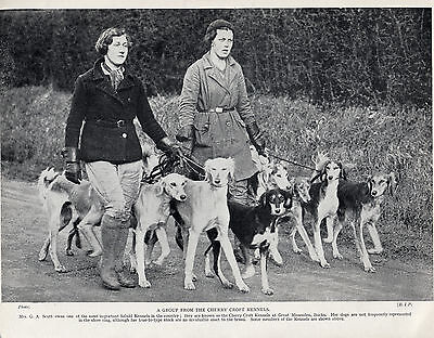SALUKI LADIES EXERCISING DOGS FROM NAMED KENNEL OLD ORIGINAL DOG PRINT FROM 1935