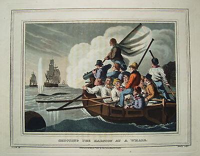 Wal Walfang Schiff sehr seltener altkolorierter Kupferstich in  Aquatinta 1813