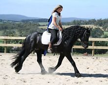 Horse riding instructor Maryknoll Cardinia Area Preview
