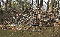 Tree Cutting, Rake Leaves, Stump Grinding, Rototilling, Odd Jobs