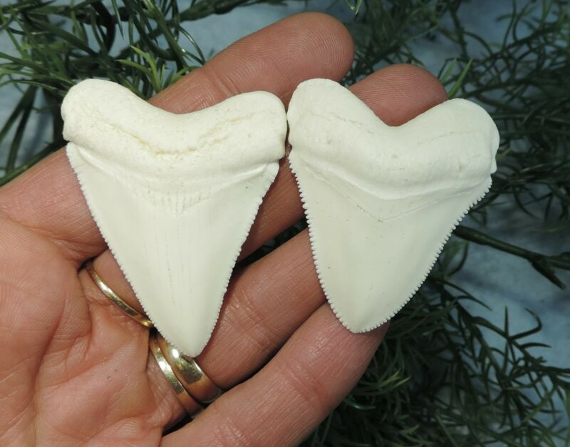 LOT OF 2   MEGALODON TEETH REPLICA / FOSSIL SHARKS TOOTH TEETH