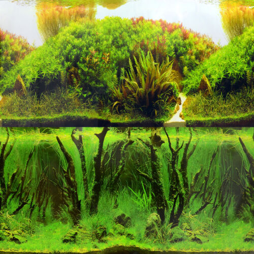 "Rolling Hills Amazon/Mystic Driftwood Forest 24"" Aquarium Background"