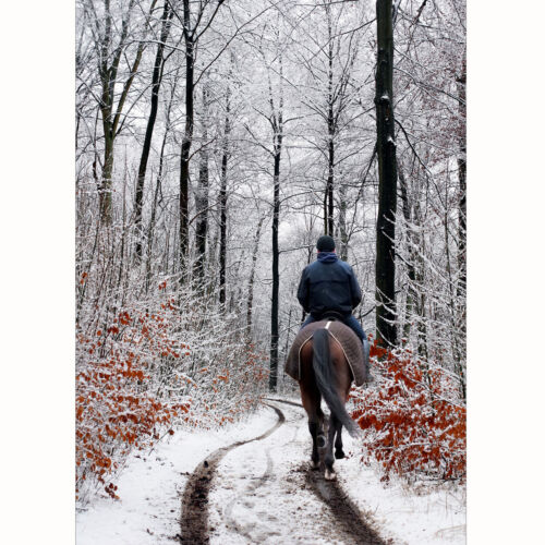 Personalised+Equestrian+Christmas+Cards+-+Pack+Of+20+-+One+Design+