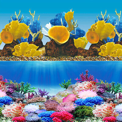 Rainbow Reef Coral 2 Scene 24