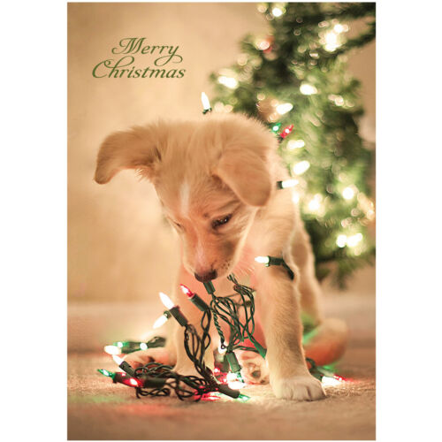 Personalised+Puppy+Christmas+Cards+-+Pack+Of+20+-+One+Design+