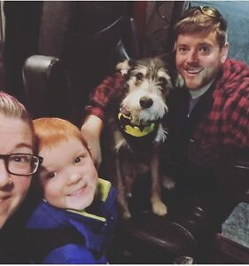 Family of 3 with service dog looking for home by June 1