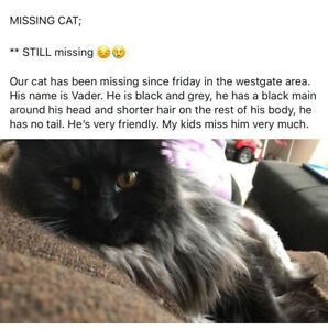 Missing cat for over 4 months, please help find him