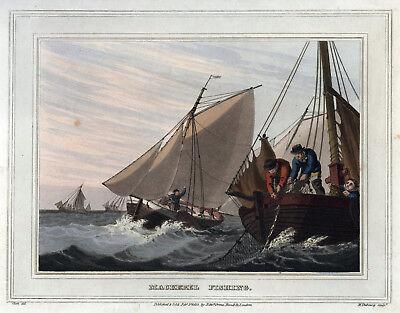 MAKRELENFISCHEN Original-Kupferstich Aquatinta 1813 - schön koloriert!