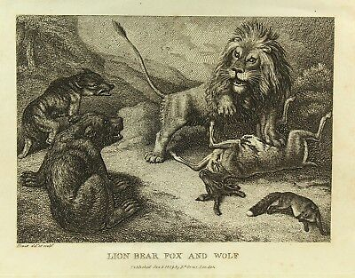 !Antique c.1809 B&W Engraving Lion, Bear, Fox and Wolf by S. Howitt London Print