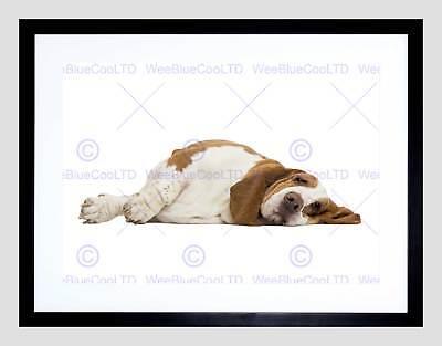 Basset Hound Photo Frame - PHOTO ANIMAL DOG CANINE BASSET HOUND RELAX COOL CUTE FRAMED ART PRINT B12X8396