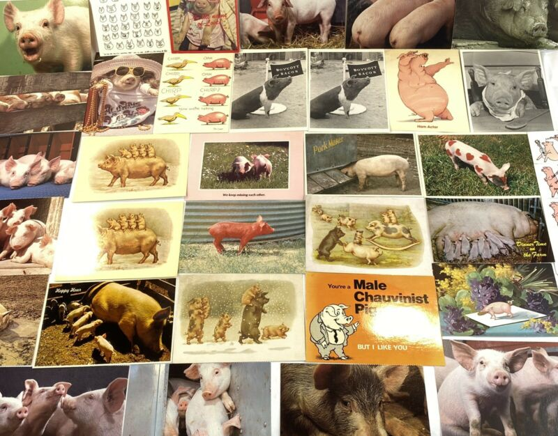 Vintage RARE 1980s Post Cards Collection with Pigs, Pig, Hog, Hogs Lot of 32