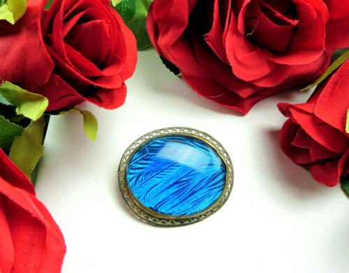 Stunning Antique BLUE MORPHO Butterfly Wing Silver Tone Oval Brooch Pin C Clasp