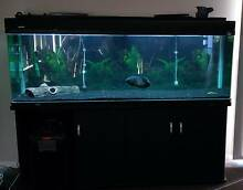 6Ft 540L AquaOne Fish Tank, includes Eheim 1200XL External Filter Young Young Area Preview