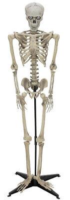 EUROPALMS Halloween Figur Cellskel 163cm Skelett mit Licht, Sound und Bewegungen