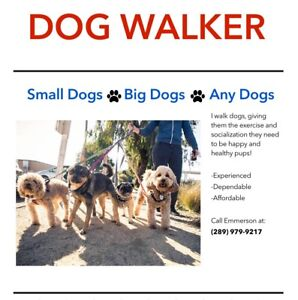 Dog Walker available in Millbrook