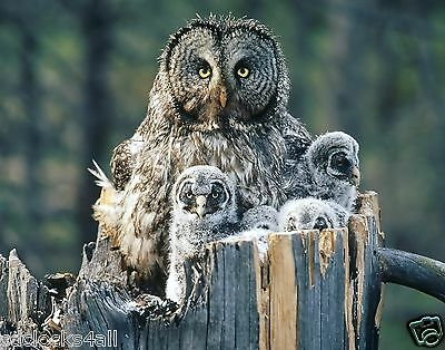 Owl GLOSSY Photo Picture  Wall Decor / * Print * PICK YOUR SIZE * - Owl Photo