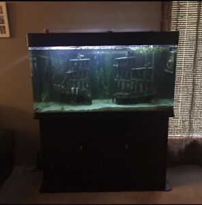 Fish tank and fish looking for a new home