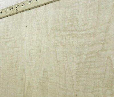 Curly Figured Tiger Maple Wood Veneer 24 X 96 With Psa Adhesive Aa Grade