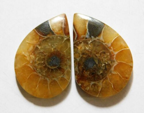 33.90 Cts Natural Ammonite (27mm X 17.5mm each) Loose Cabochon Match Pair