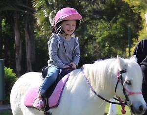 Welsh x. Tiny Tot's Pony. Browns Plains Logan Area Preview