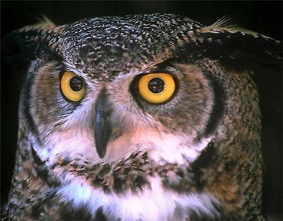 Bird Sounds from North America, Bird Songs and Bird Calls. 25 Singing Birds