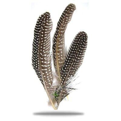 Perlhuhnfedern 15 - 20 cm natur, für Trachtenhüte und viieeeles (Huhn Hüte)