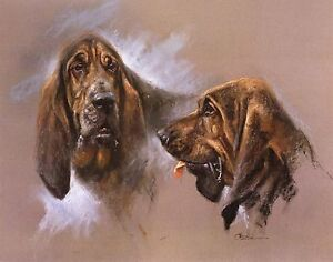 BLOODHOUND-DOG-FINE-ART-LIMITED-EDITION-PRINT-M-Cawston