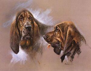BLOODHOUND-DOG-FINE-ART-LIMITED-EDITION-PRINT-M-Cawston