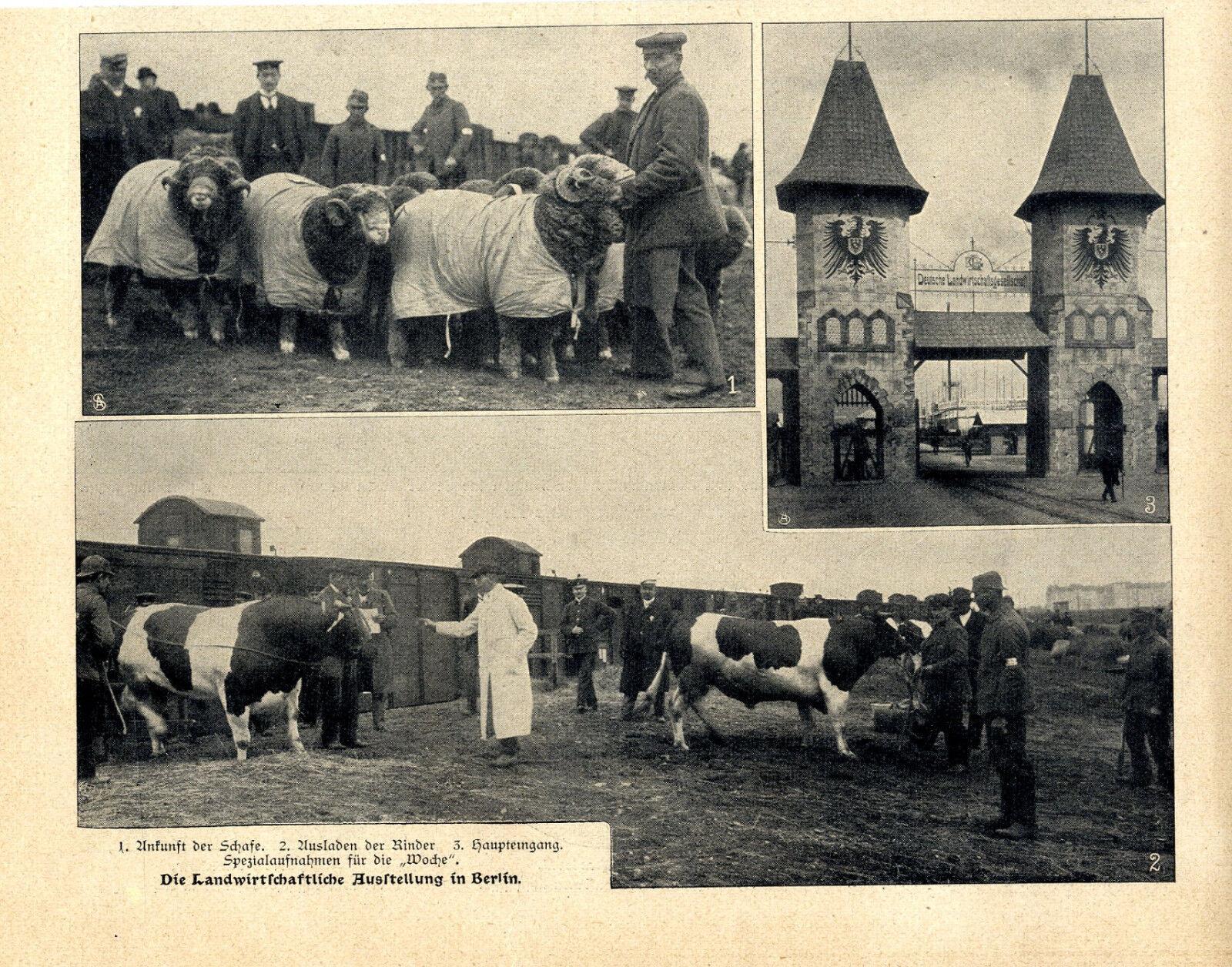 Die Landwirtschaftliche Ausstellung in Berlin Haupteingang Tierzucht v. 1906