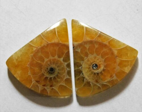 24.10 Cts Natural Ammonite (22mm X 20mm each) Loose Cabochon Match Pair