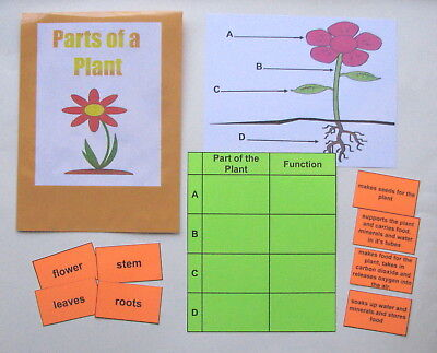 Teacher Made Science Center Educational Learning Resource Game Plant Parts