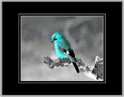 Teal Gray Bird Photo Art Country Wall Decor Picture Matted Print