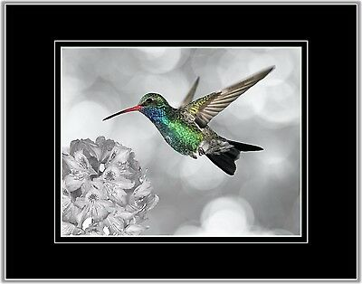 Hummingbird Photo Art Bird Wall Decor Picture Matted Print Green Gray Red Blue