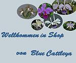 blue-cattleya