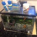 Fish tank Burnie Burnie Area Preview