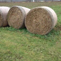 Wheat Straw for sale London Ontario image 1