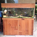 4 foot fish tank set up Mountain Creek Maroochydore Area Preview