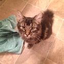 Kitten needing new home