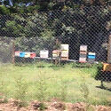 Organic farm / orchard beehive site wanted / Pollination service Beerwah Caloundra Area Preview