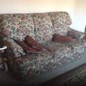 Sofa bed and couches, very negotiable Stanhope Gardens Blacktown Area Preview