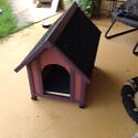 Small dog kennel Lismore Heights Lismore Area Preview
