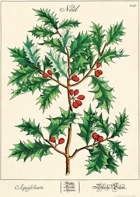 Cavallini & Co. Christmas Holly Decorative Paper Sheet / Poster / Wrap ()